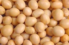 Soy bean Royalty Free Stock Photos