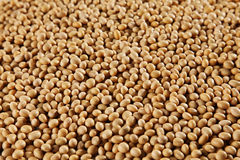 Soy bean Royalty Free Stock Photo