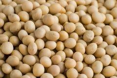Soy bean Stock Photo