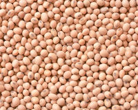 Soy bean background Royalty Free Stock Photos