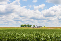 Soy bean and corn field. A soy bean and corn field with blue sky and clouds on a Missouri USA farm Royalty Free Stock Photos