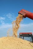 Soy bean harvesting. Grain auger of combine pouring soy bean into tractor trailer Royalty Free Stock Image