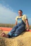Soy bean harvesting Stock Photos