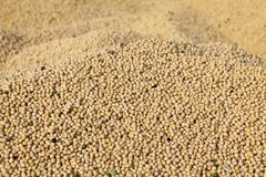 Soy bean harvesting Stock Images