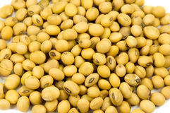 Soy bean isolated Stock Images