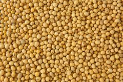 Soy bean pattern Royalty Free Stock Image