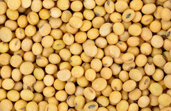 Soy bean pattern as background Royalty Free Stock Photos
