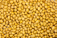 Soy bean Royalty Free Stock Photos