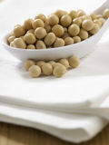 Soy bean Royalty Free Stock Image