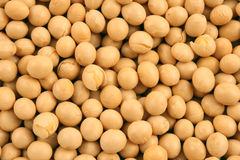 Free Soy Beans Stock Photography - 6951592