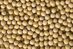 Soy Beans. Background close up full frame Stock Photography
