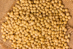 Soy beans Royalty Free Stock Photography