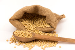 Soy beans Stock Photos