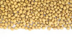 Soy beans . Royalty Free Stock Images