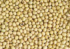 Soy beans . Royalty Free Stock Photography