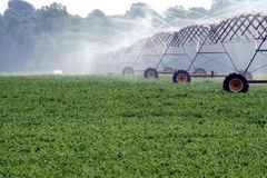 Soy Beans & Irrigation System. This is an image of a soy bean field and irrigation system royalty free stock photo