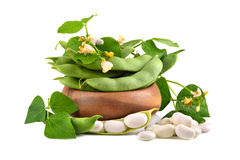Soy beans with leaves Stock Images