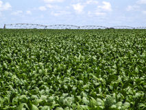 Soy field. And irrigation system in Mato Grosso state, Brazil Royalty Free Stock Photo