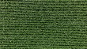 Soy field plantation aerial view