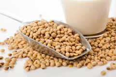 Soy milk in glass with soybeans and  transfer scoop Royalty Free Stock Photo