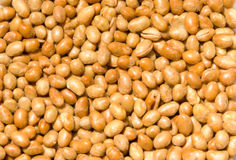 Soy Nuts Stock Image