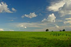Soy plantation. A soy plantation in the field Royalty Free Stock Photos