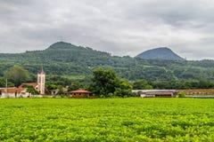 Soy plantation in Farm Stock Photography
