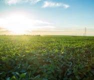 Soy plantation field plan Royalty Free Stock Image