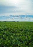 Soy plantation field plan Stock Photography
