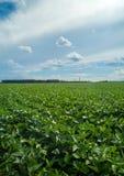 Soy plantation field plan Royalty Free Stock Photo