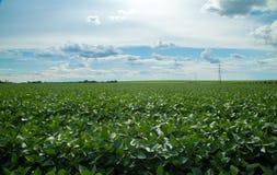 Soy plantation field plan Stock Image