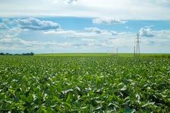 Soy plantation field plan Stock Photo