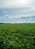 Soy plantation field plan Royalty Free Stock Photography