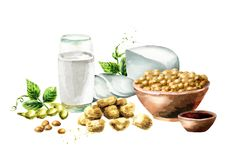 Soy products composition with soybeans, milk, meat, tofu, sauce and green leaves. Watercolor hand drawn illustration royalty free stock photos