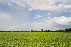 Soy Rainbow II Royalty Free Stock Photo