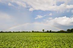 Soy Rainbow II Royalty Free Stock Photo