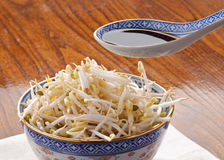 Soy sauce on soy sprout Royalty Free Stock Image
