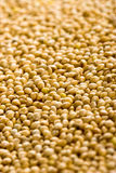 Soy seeds - harvest Stock Photo