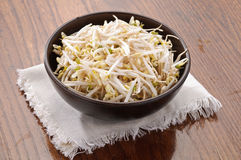 Soy sprout in the bowl Royalty Free Stock Images