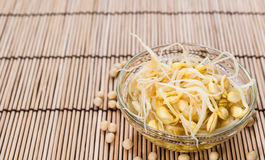 Soy Sprouts (preserved) Stock Image