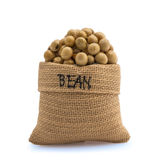Soya Bean Stock Photography