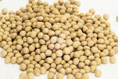 Soya bean Stock Image
