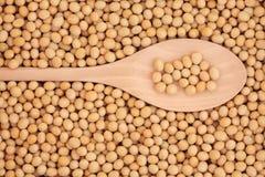 Soya Beans Stock Photo
