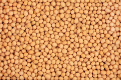 Soya Beans. Soya bean pulses forming a textured background Stock Images