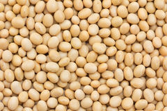 Soya beans. Image of close up of soya beans background Stock Image