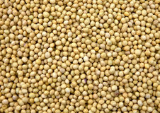 Soya Beans. For sale in a morning market Royalty Free Stock Photography