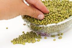 Soya beans Stock Images