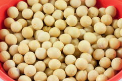 The soya beans Royalty Free Stock Photos