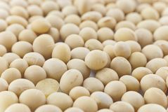 Soya Beans Close-up - Full Frame Royalty Free Stock Image