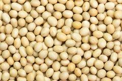 Soya beans Stock Image